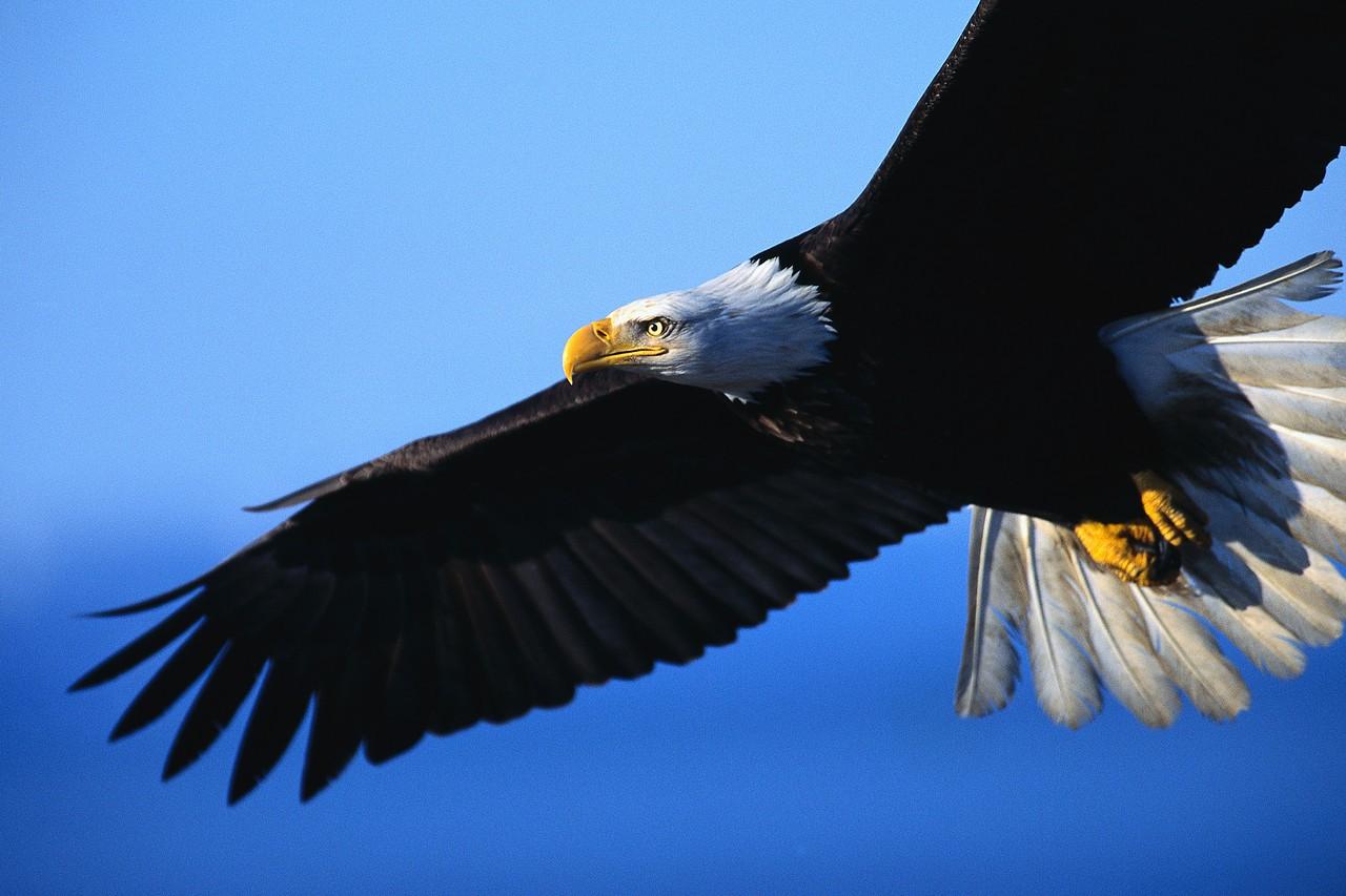 Visite de Paris sur la tête d'un aigle